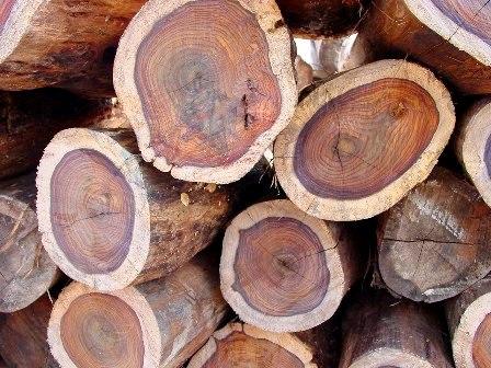 Сушка различных пород древесины