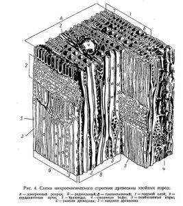 Структура древесины пористость
